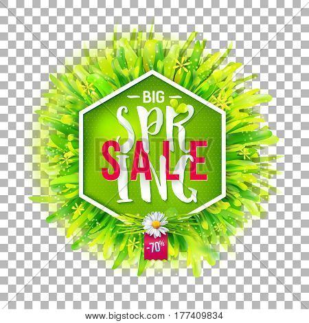Big spring sale label with green grass and chamomile on transparent background. Geometric label with realistic nature backdrop. Promotion banner. May used as banner, poster, flyer. Vector illustration