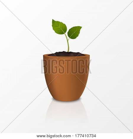 Vector growth concept. Design template of realistic icon of the sprout in a brown flower pot, isolated on white background. EPS10 illustration.