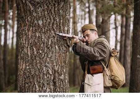 Pribor, Belarus - April 23, 2016: Re-enactor Dressed As Russian Soviet Infantry Soldier Of World War II Hidden Standing With Rifle Weapon In An Ambush Near Tree In Autumn Spring Forest