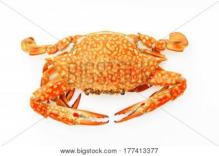 Cooked crab on a white background .