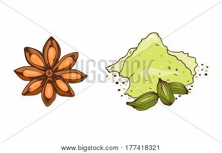 Cooking ingredients garlic paprika curry and seasoning hand drawn style vegetable ingredient vector illustration