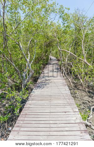 Natural trail of wooden bridge walkway into the sea along with mangrove forest.
