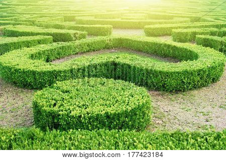 Green Labyrinth In The Park
