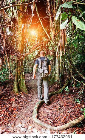 man walk in malaysia rainforest