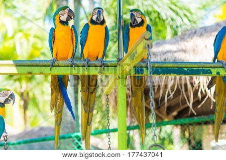 Blue Yellow Macaw Colorful Bird