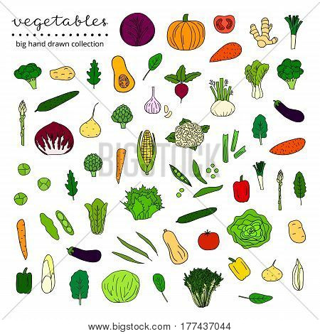 Big collection of hand drawn vegetables and leafy greens isolated on white background.