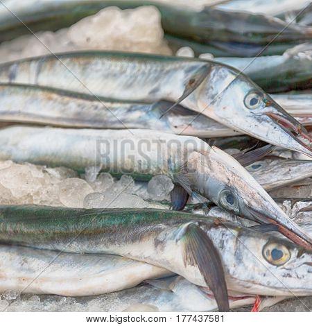 In Oman Market   Fish
