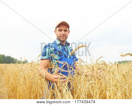 Farmer In A Plaid Shirt Controlled His Field.. Shows The Wheat Harvest.