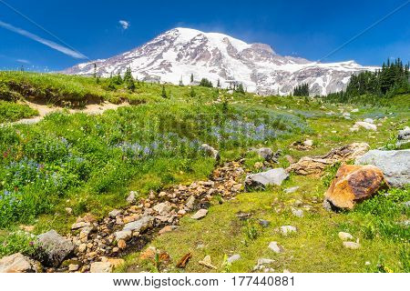 Mount Rainier Washington with field of wildflowers and stream in foreground.