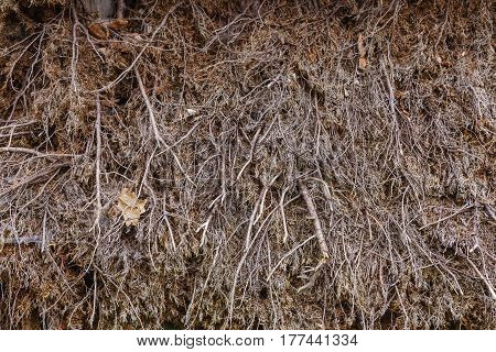 Patterns and textures details concept. Detailed closuep of dry dark hay background