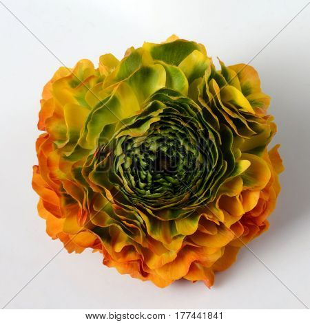 Flower Background, Macro Of Orange, Yellow, Green Petals