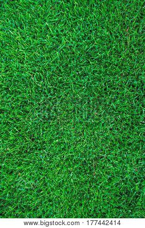 Green natural real fresh grass land texture