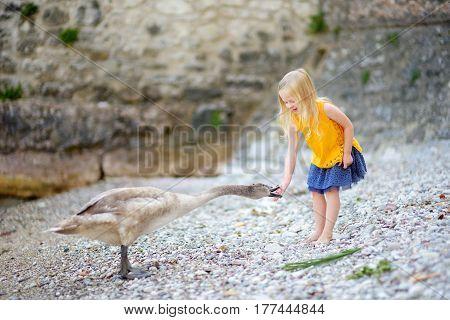Adorable Little Girl Feeding Young Swan On A Pebble Beach