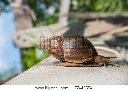 image of the Garden snail isolated .