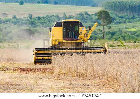 Tractor Harvesting A Soybean Plantation