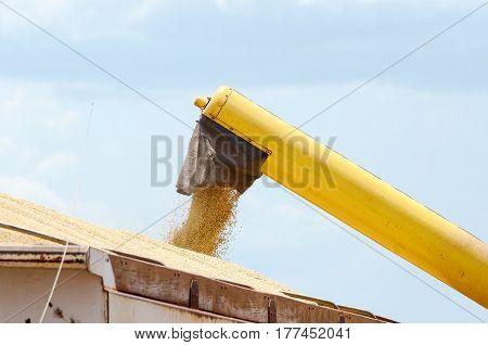 Tractor Pouring Soybeans On Truck