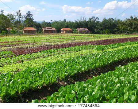 Little farmhouses and the organic vegetable farm in the sunlight, Thailand