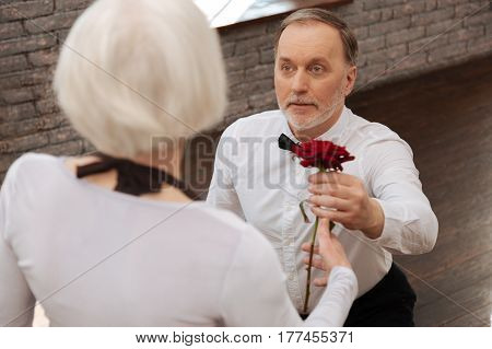 It is never late to reveal your feelings . Gallant confident optimistic aged pensioner dancing with aged woman in the dance studio while expressing love and giving red rose