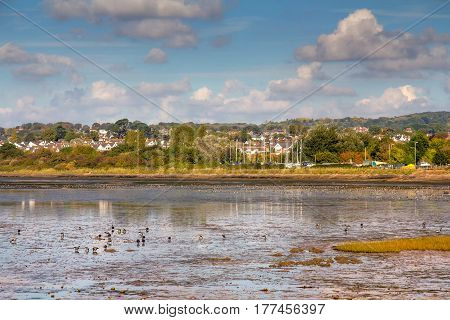 Large flocks of birds arrived for wintering to the banks of the river Exe. Exmouth. Devon. England