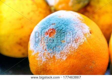 moldy orange citrus fruit mold closeup circular shape