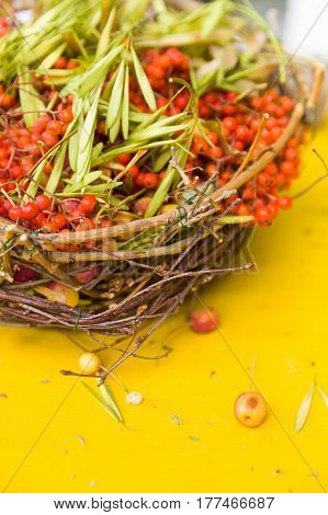 Nice ripe bunches of rowan berries in a wicker basket on yellow background. Still rowan berries in the basket. red mountain ash in a wicker basket. Autumn concept.