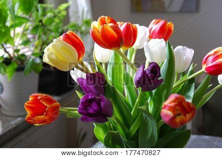 Beauty colorful tulips bouquet by a window