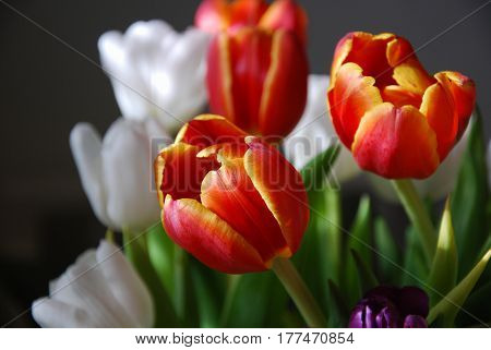Glorious tulips closeup in a lovely springtime bouquet