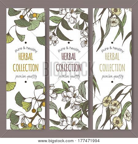 Set of three color vector herbal tea labels with Ginkgo biloba, jasmine and eucalyptus hand drawn sketch. Placed on white background.