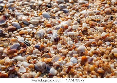 Beach from the sinks of mollusks shattered and ground by water