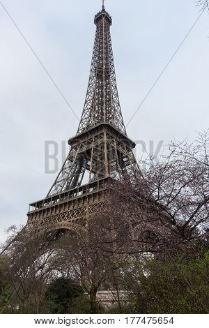 Eiffel tower. Look through tree in the pink blossom