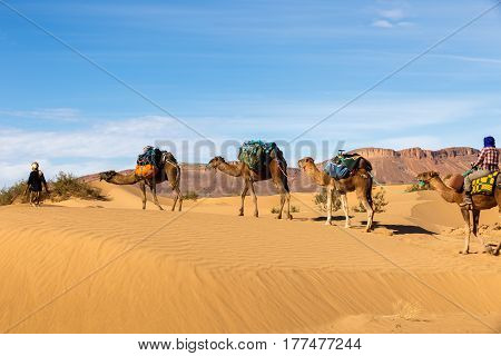 caravan of camels in the Sahara desert