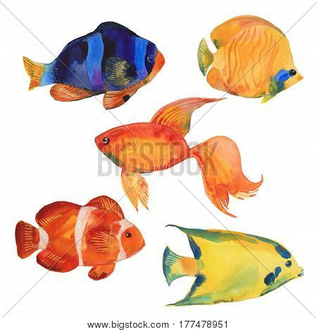 Tropical fish watercolor illustration on white background