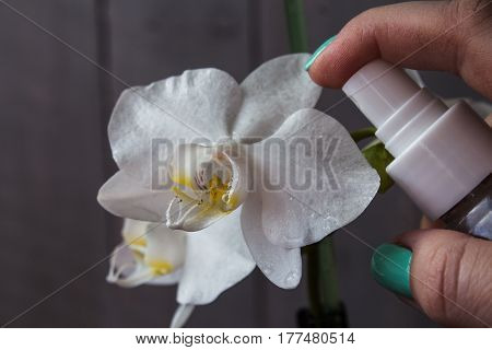 a white orchid and woman hand with sprayer