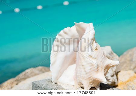 beautiful ocean sea shell seashell or cockleshell white color sunny summer outdoor on blurred background travelling and vacation souvenir