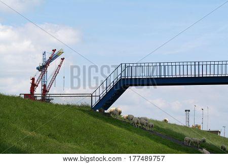 Delfzijl, Sheeps Under The Bridge