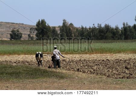 Farmers and Agriculture of Ethiopia in Africa