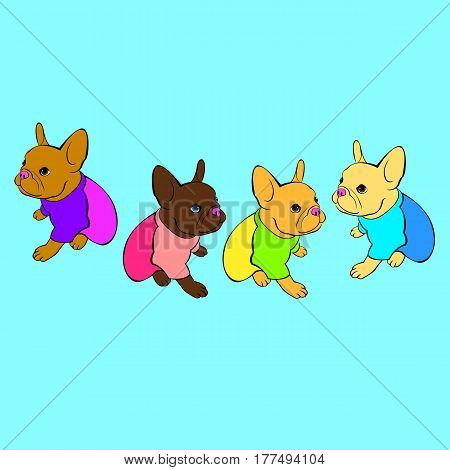 vector portrait of the domestic dogs French Bulldog breed