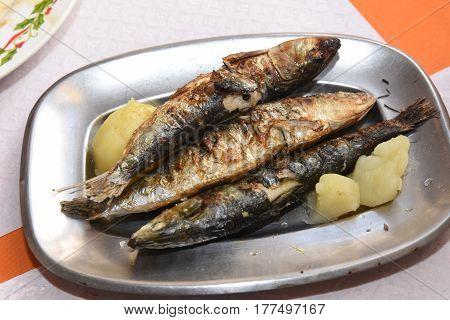 Delicious plate of sardines, typical cousine of Portugal