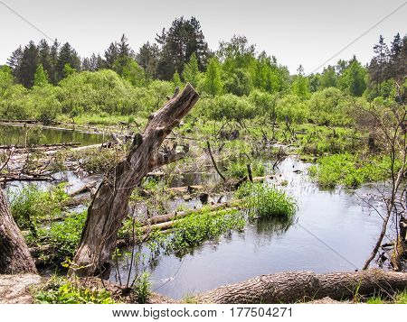Blockage On The River, Pine Trunks In The Water Overgrown With Grass