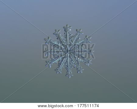 Macro photo of real snowflake: rare snow crystal with twelve ornate arms and fine symmetry glitters on pale gradient background in cold light.
