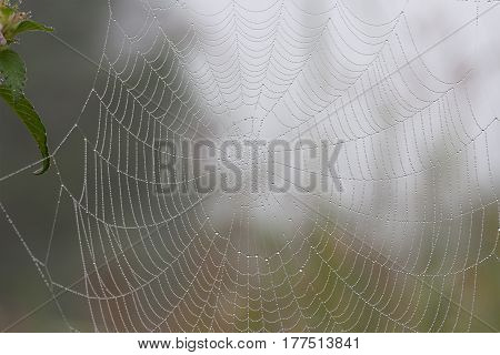 Spider web in the morning forest with waterdrop