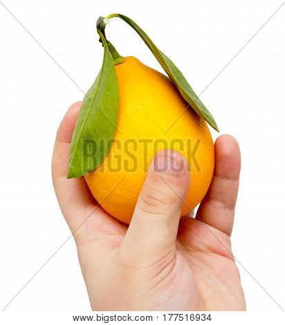 lemon in his hand on a white background .