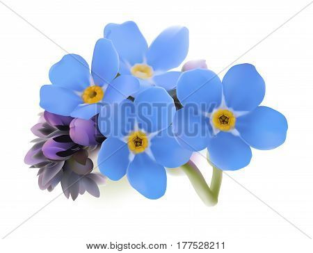 Forget-me-not. Myosotis. Hand drawn vector illustration of blue spring flowers with yellow center on white background.