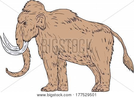 Drawing sketch style illustration of a woolly mammoth Mammuthus primigenius a prehistoric elephant that lived during the Pleistocene epoch and one of the last mammoth species standing viewed from the side set on isolated white background.
