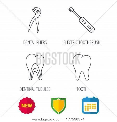 Tooth, electric toothbrush and pliers icons. Dentinal tubules linear sign. Shield protection, calendar and new tag web icons. Vector