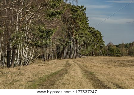 Path near forest and field in north Bohemia in spring sunny day