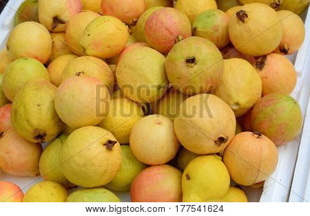 Delicious Mature Yellow Guava Fruits