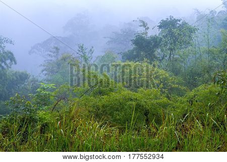 green forest fresh morning after rain at National park in countryside of Thailand