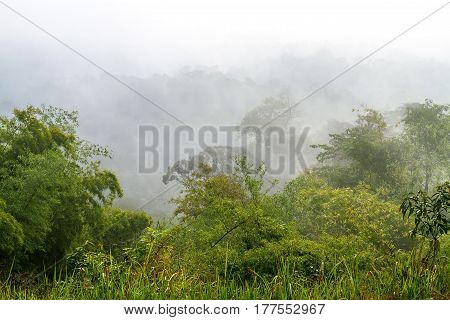Tree forest fresh with foggy after rain at National park in countryside of Thailand