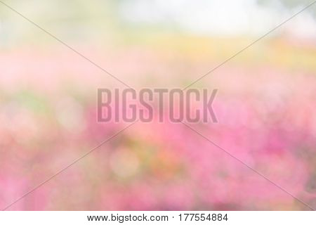 blurred pink flower in garden as abtract bokeh background